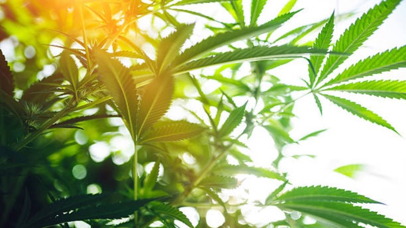 New CBD line from Layn inspires $60m manufacturing facility